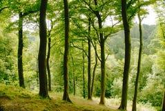 Przez drzew Zdjęcia Stock