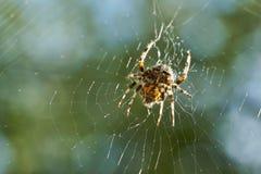przez jego pajęczyna zdjęcie stock