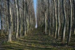 Przez lasu Obrazy Stock