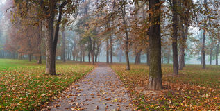Przez lasu mgłowego parka panoramy droga Fotografia Stock