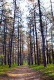 Przez lasu pasa ruchu bieg Obrazy Royalty Free