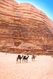 Przez siq wielbłądzia wycieczka Um Tawaqi, Wadiego Rum, Jordania Obrazy Royalty Free