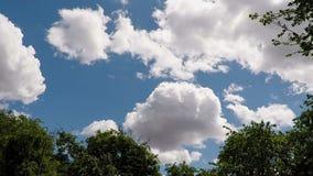 Przyśpieszający W górę Białych cumulus chmur Przekształcać W niebieskim niebie zbiory wideo