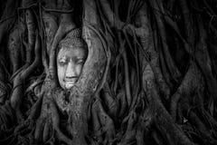 Przy Ayutthaya Buddha głowa obrazy royalty free