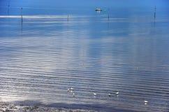 Przy brzeg Wschodni Scheldt obrazy stock