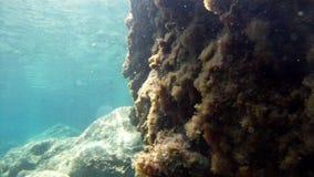 Przy dnem morze 5
