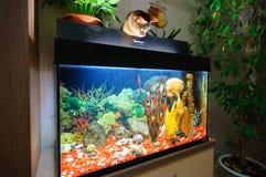 Przy dopatrywanie ryba w akwarium obraz royalty free