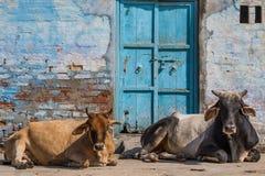 Przy granicą z Pakistan zadziwiająca przyroda Rajasthan zdjęcia stock