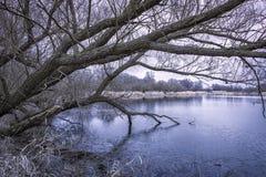 Przy jeziorem w zimie Zdjęcie Stock