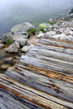 Przy jeziorem wietrzny mgłowy ranek Obraz Royalty Free