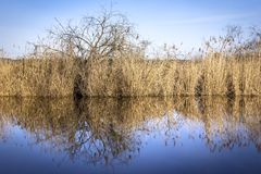 Przy jeziornym, pięknym odbiciem płocha, Zdjęcie Stock