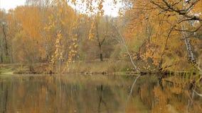 Przy lasowym jeziorem w spadku zdjęcie wideo