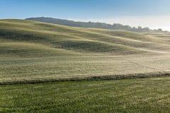 Przy mglistym ranek toskańscy wzgórza Fotografia Stock
