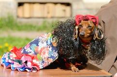 Przy miasto rywalizaci psami Zdjęcie Royalty Free