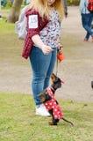 Przy miasto rywalizaci psami Obrazy Royalty Free