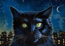 Przy Noc czarny Kot Fotografia Royalty Free