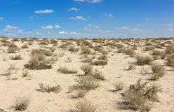 Przy południe arabska pustynia Fotografia Royalty Free