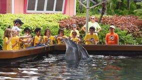 Przy Seaworld Obozów letnich dzieci wita delfinu przy Seaworld zdjęcie wideo