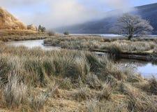 Przy Talybont zima ranek Zdjęcia Royalty Free