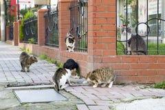 Przybłąkany kot Wykolejeniec, opustoszały, samotny kot plenerowy, zdjęcie royalty free