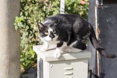 Przybłąkany kot Wykolejeniec, opustoszały, samotny kot plenerowy, zdjęcia royalty free