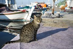 Przybłąkany kot Wykolejeniec, opustoszały, samotny kot plenerowy, obraz stock