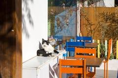 Przybłąkany kot Wykolejeniec, opustoszały, samotny kot plenerowy, obraz royalty free