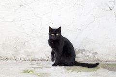 Przybłąkany kot Wykolejeniec, opustoszały, samotny kot plenerowy, zdjęcia stock
