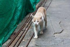 Przybłąkany kota odprowadzenia puszek ulica fotografia royalty free