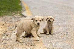 Przybłąkany pies Wykolejeniec, opustoszały, samotny psi plenerowy, fotografia stock