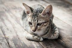 Przybłąkana kota portreta poczta na drewnianym Obrazy Stock