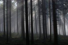 Przybłąkanego światła mgłowy las Fotografia Royalty Free