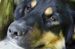 Przybłąkanego psa †‹â€ ‹z smutnymi oczami zdjęcie royalty free