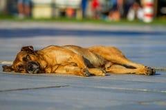 Przybłąkanego psa lying on the beach w słońcu fotografia royalty free