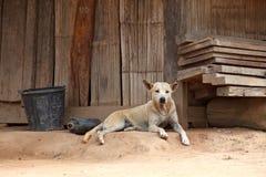 Przybłąkanego psa portret przed tradycyjnym drewnianym domem Zdjęcie Royalty Free