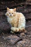 przybłąkani kotów drewna Zdjęcie Stock