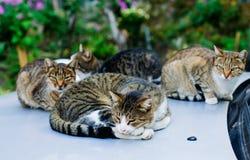 Przybłąkani koty śpi na samochodzie obraz royalty free