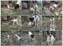 Przybłąkani psy i swój dzieci Zdjęcie Stock