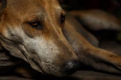Przybłąkani psy są smutni Obrazy Stock