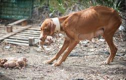 Przybłąkany chuderlawy pies zdjęcia royalty free