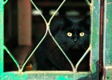 Przybłąkany czarny kot w lochu Fotografia Stock