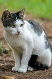 Przybłąkany kot Zdjęcia Royalty Free