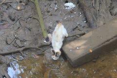 Przybłąkany kot Fotografia Royalty Free