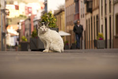 Przybłąkany kot Fotografia Stock