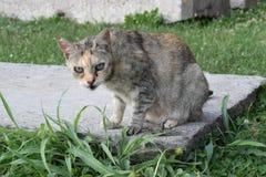 Przybłąkany kot Zdjęcie Royalty Free