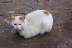 Przybłąkany kot był zimny Zdjęcie Royalty Free