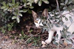 Przybłąkany kot chuje w krzakach Fotografia Royalty Free