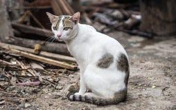 Przybłąkany kot gubjący do domu Obraz Stock