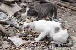 Przybłąkany kot je rybią kość Obraz Royalty Free