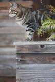 Przybłąkany kot na drewnianym plantatorze Zdjęcia Royalty Free